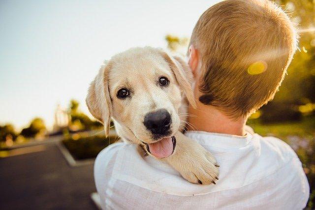 cara de perro sobre hombre